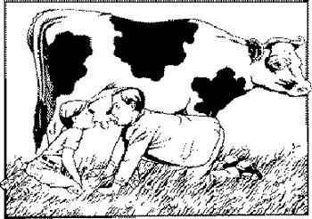 Tomando leche vacuna