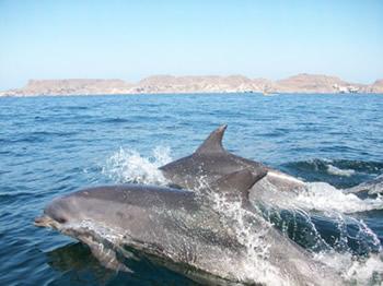 Conexión Delfín