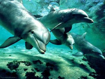 Sanación Delfín