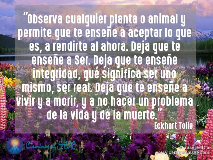 """""""Observa cualquier planta o animal y permite que te enseñe a aceptar lo que es, a rendirte al ahora. Deja que te enseñe a Ser. Deja que te enseñe integridad, qué significa ser uno mismo, ser real. Deja que te enseñe a vivir y a morir, y a nohacer un problema de la vida y de la muerte"""". Eckhart Tolle, Practicando el Poder del Ahora"""