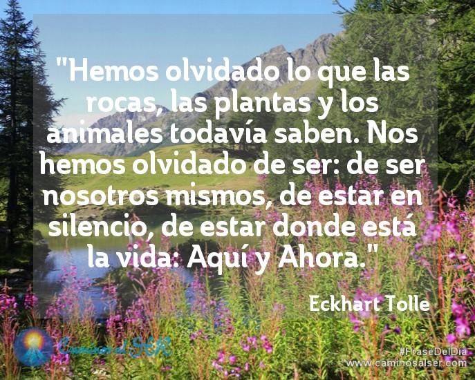 """""""Hemos olvidado lo que las rocas, las plantas y los animales todavía saben. Nos hemos olvidado de ser: de ser nosotros mismos, de estar en silencio, de estar donde está la vida: Aquí y Ahora"""". Eckhart Tolle, libro """"El Silencio Habla"""""""